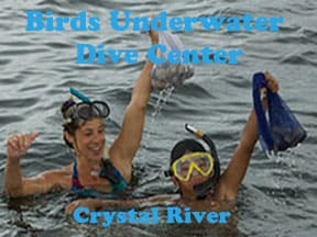 Scalloping Crystal River with bird's Underwater dive center