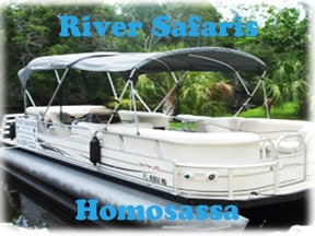 Homasassa scalloing with River safaris