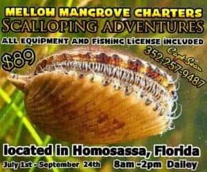 mellow mangrove new